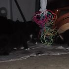 Cats in the bedroom -(180513)- FujiFilm FinePix AX350 by paulramnora