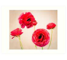 Five poppies Art Print