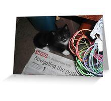 Kitten, hiding -(180512)- Digital photo/FujiFilm FinePix AX350 Greeting Card
