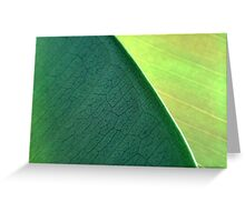 Close up Of Leaf Greeting Card