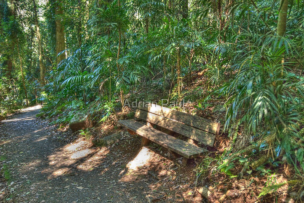 Rainforest Resting Place by Adrian Paul