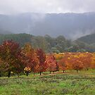 Autumn, Myrtleford, Vic by patapping