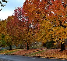 Autumn Colours, Bright. Vic by patapping