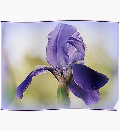 My Iris Opened Poster