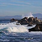 """The Majestic Sea"" by Gail Jones"