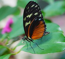 Butterfly Macro 10 by Brandon Wooters