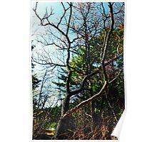 A Scarred River Bank Tree Poster