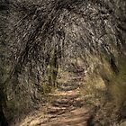 The Path We Take by Ben Loveday
