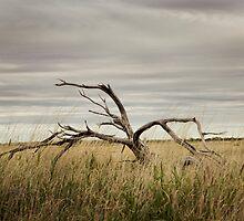 Pilbara Landscapes by tjoreilly