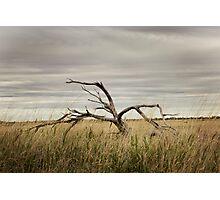 Pilbara Landscapes Photographic Print