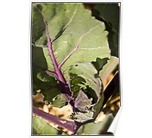 Red Cabbage Macro Poster
