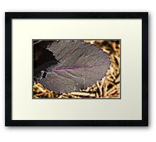 Red Cabbage Macro Framed Print