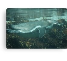swimming penguin Canvas Print
