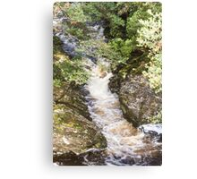 Weindorfers Forest, Cradle Mountain, Tasmania #2 Canvas Print