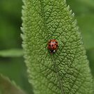 Lady Bug by CreatorsBeauty