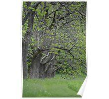 Willowwood Arboretum  Poster