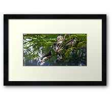 Family of Noisy Miners Framed Print