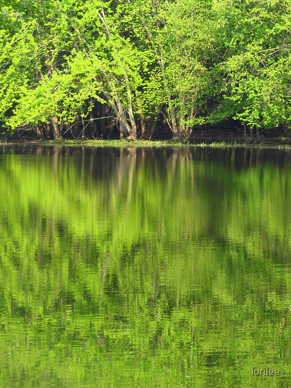 Spring Green Reflections by lorilee