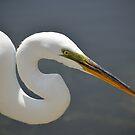 Radar The Great Egret by Kathy Baccari