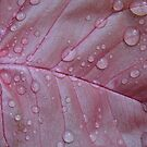 Pink With Water Drops by WildestArt