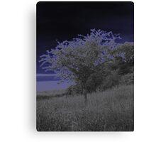 Twilight tree Canvas Print