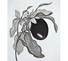 Eggplant in Charcoal Photographic Print