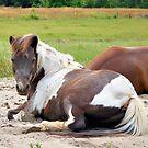 Resting by ©Dawne M. Dunton