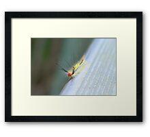 White-Marked Tussock Moth Caterpillar Framed Print
