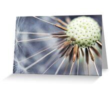 Dandelion fluff... 3 Greeting Card