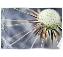 Dandelion fluff... 3 Poster