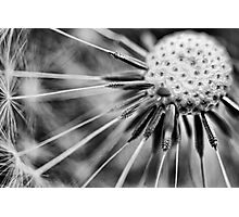 Dandelion fluff... 3 (BW) Photographic Print