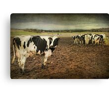Standing Out from the Crowd...Or Herd Canvas Print
