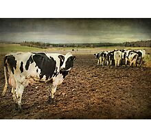 Standing Out from the Crowd...Or Herd Photographic Print