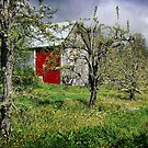 Barn in the Orchard by Amanda White