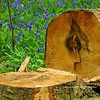 Bluebell Logs  by Laura  Cutts