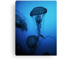 Portrait of a Jellyfish- Blue Canvas Print