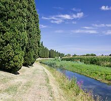 The Cypresses by Emmeci74