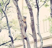 Peekaboo Squirrel - Original Photography by WayfarerPrints