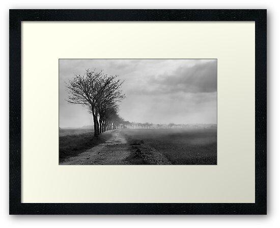Misty Marsh by Dave Godden