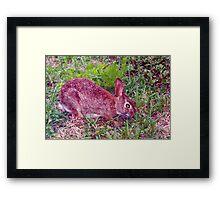 Cute as a bunny Framed Print