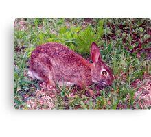 Cute as a bunny Canvas Print