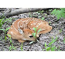 New Born Fawn Photographic Print