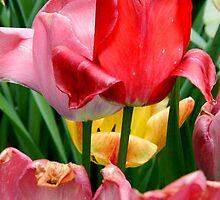 Spring is the doorway to summer..☺☺☺☺ by jammingene