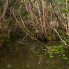 Balcombe Creek. by Bette Devine