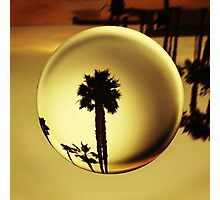 Golden Palm Tree Crystal Sunset Photographic Print