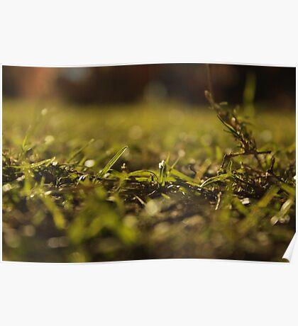 Nighttime Grass Poster