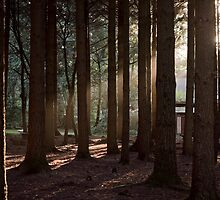Stover Country Park by katieholliday
