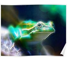 Southern Bell Frog Poster