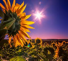 Saluting the Sun... by Tracie Louise
