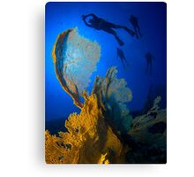Floating above the Fans Canvas Print